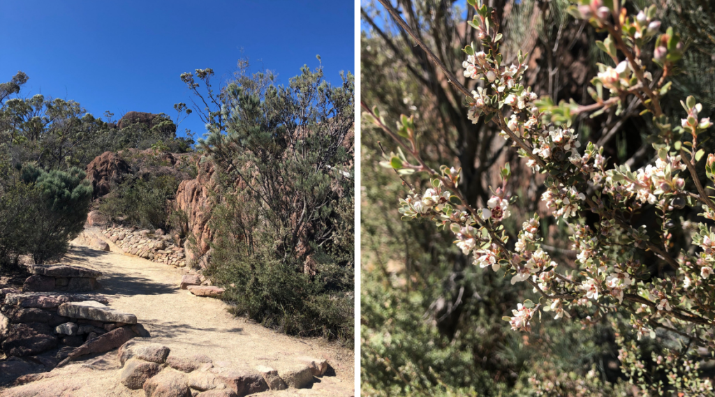 "Australia's native flora on the trail to ""The Lookout"""